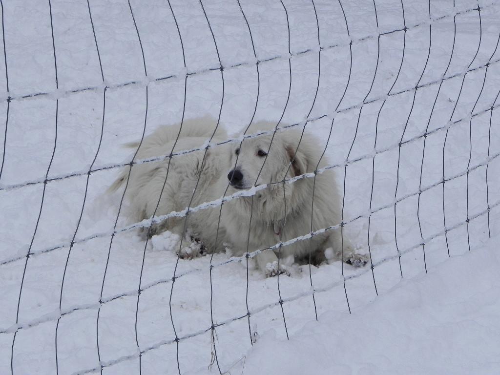 Eva in the snow 2011